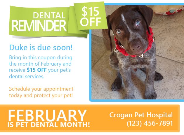 veterinary dental